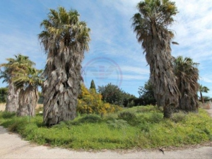 Land for sale in Almancil ldo12219