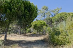 Land for sale in Quinta do Lago ema12716