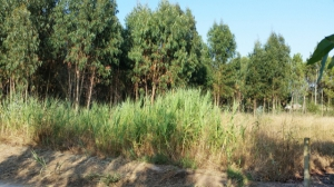 Forestry_for_sale_in_Sao Martinho do Porto_sco12825