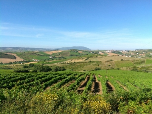 Vineyard_for_sale_in_Torres Vedras_sma12932