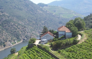 Vineyard_for_sale_in_Peso da Regua_sma13064