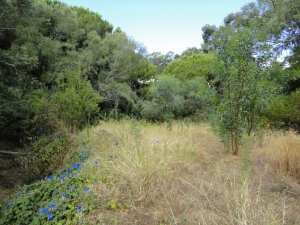 Land for sale in Albufeira sma13118