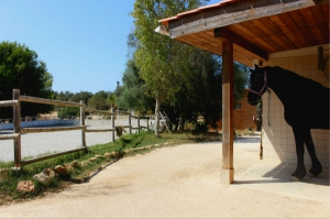 Equestrian Property_for_sale_in_Mexilhoeira Grande_sma13202