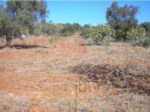 Vineyard_for_sale_in_Albufeira_VPA4093