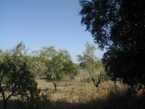 Land_for_sale_in_Salir_LSA5052