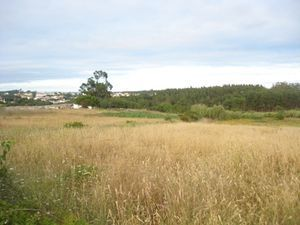 Land_for_sale_in_Nadadouro_hpo5345