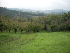 Country House_for_sale_in_caldas da rainha _CSO6490