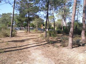 Land_for_sale_in_Almancil_SMA6565