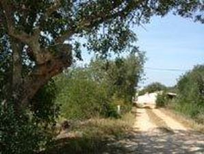 Land_te_koop_in_Loule_LDO6746