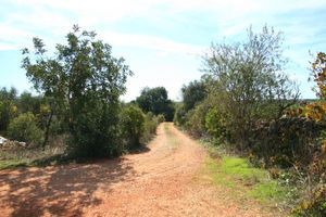 Forstwirtschaft_immobilien_for_sale_in_Silves_SMA7029
