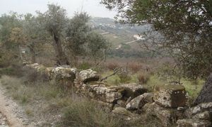 Land_for_sale_in_Santo Estevao - Benavente_FLO7189