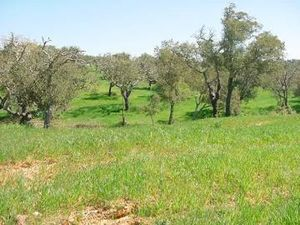 Land_for_sale_in_Comporta - Setubal_FLO7360
