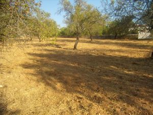 Land_for_sale_in_Paderne_SMA7890