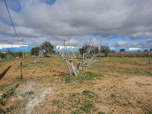 Crop_for_sale_in_Albufeira_SMA7929