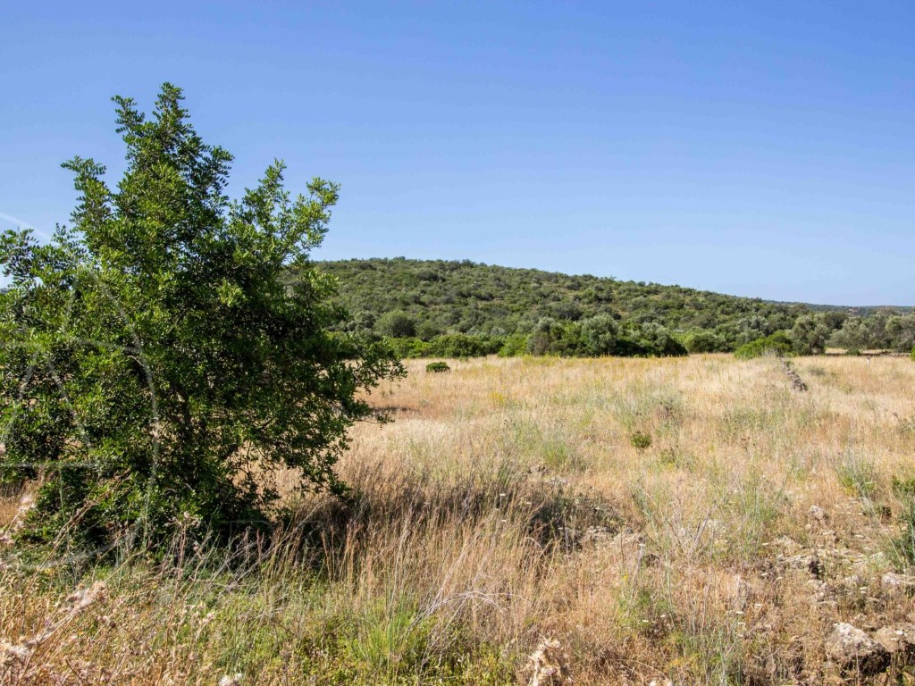 Rural Land_for_sale_in_Gorjões_sma8902