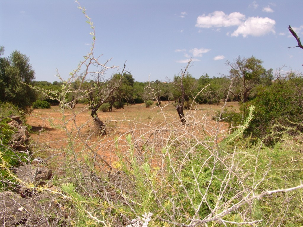 Rural Land_for_sale_in_Fornalha (Moncarapacho)_sma8906