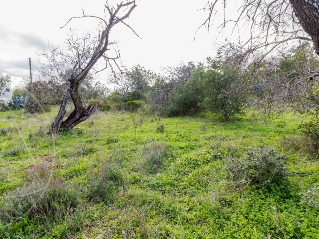 Land_for_sale_in_Loule_sma8919