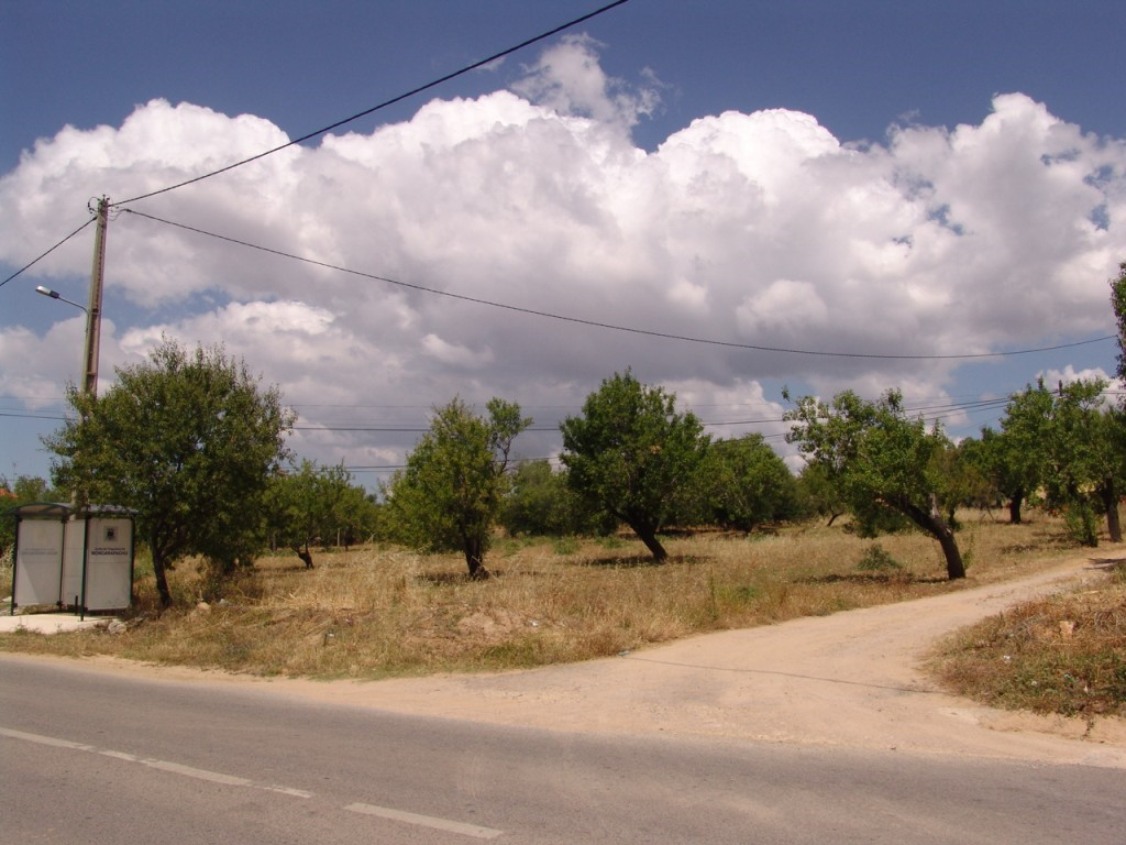 Rural Land_for_sale_in_Laranjeiro (Moncarapacho)_sma8922
