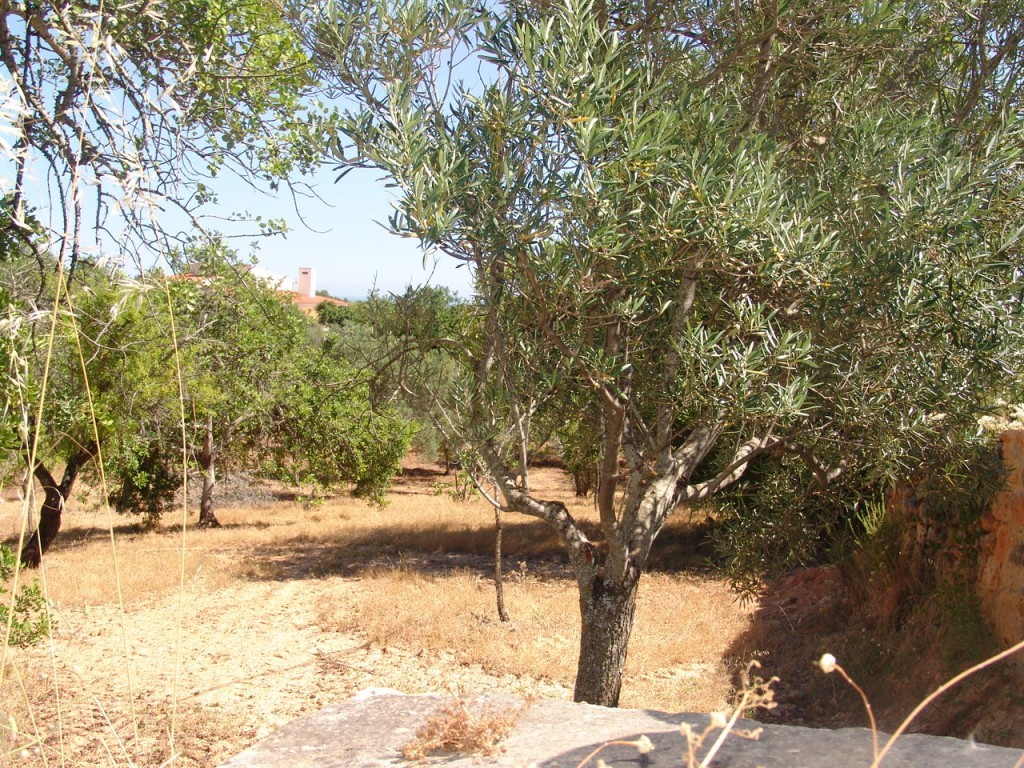 Rural Land_for_sale_in_Estói (Estoi)_sma8931