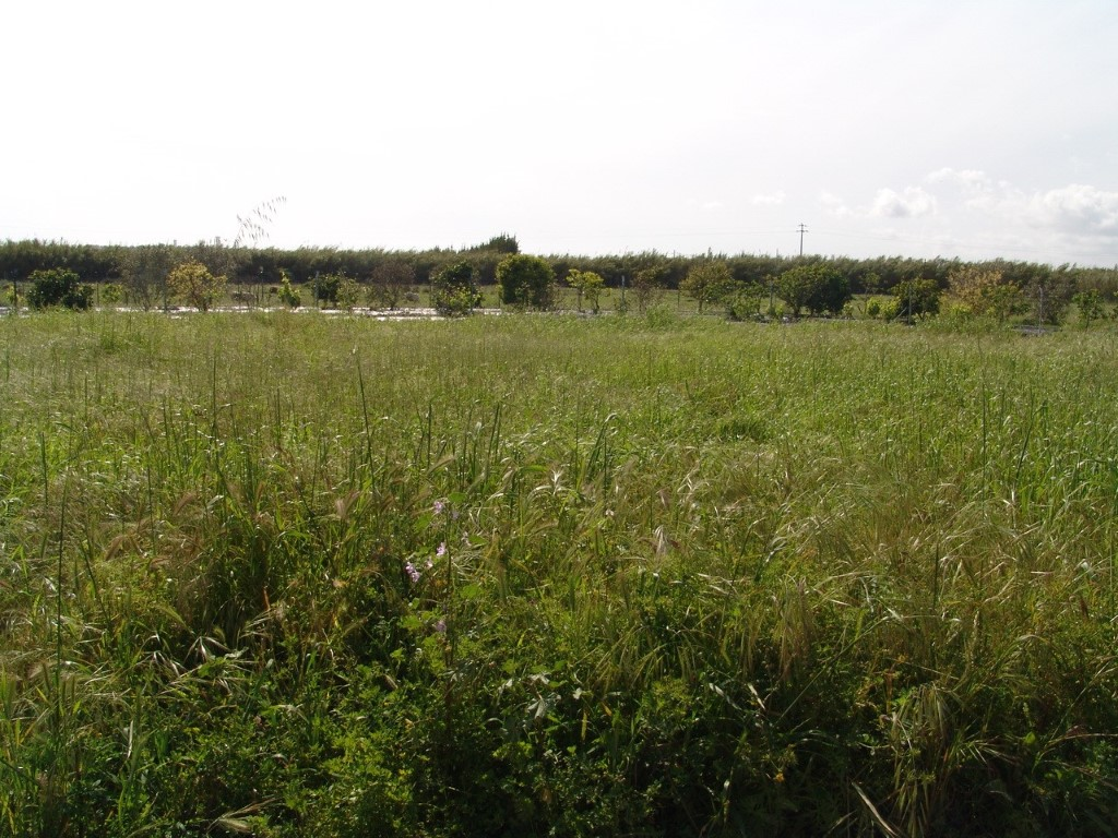 Rural Land_for_sale_in_Faro_sma8935