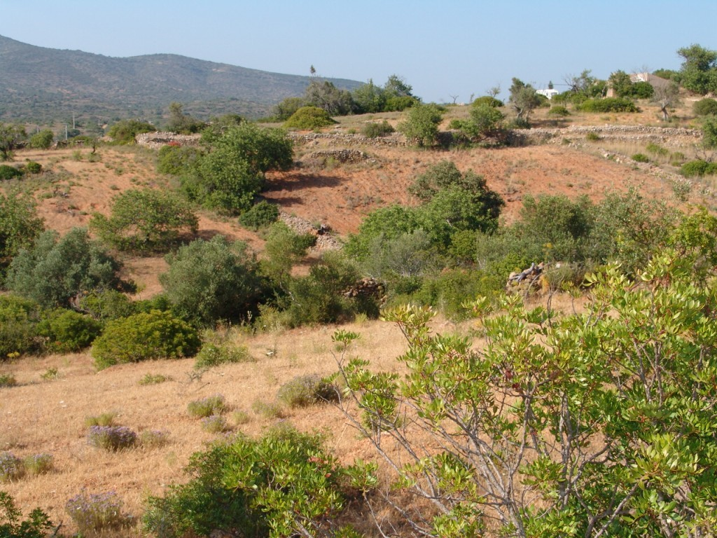 Rural Land_for_sale_in_Olhao_sma8936
