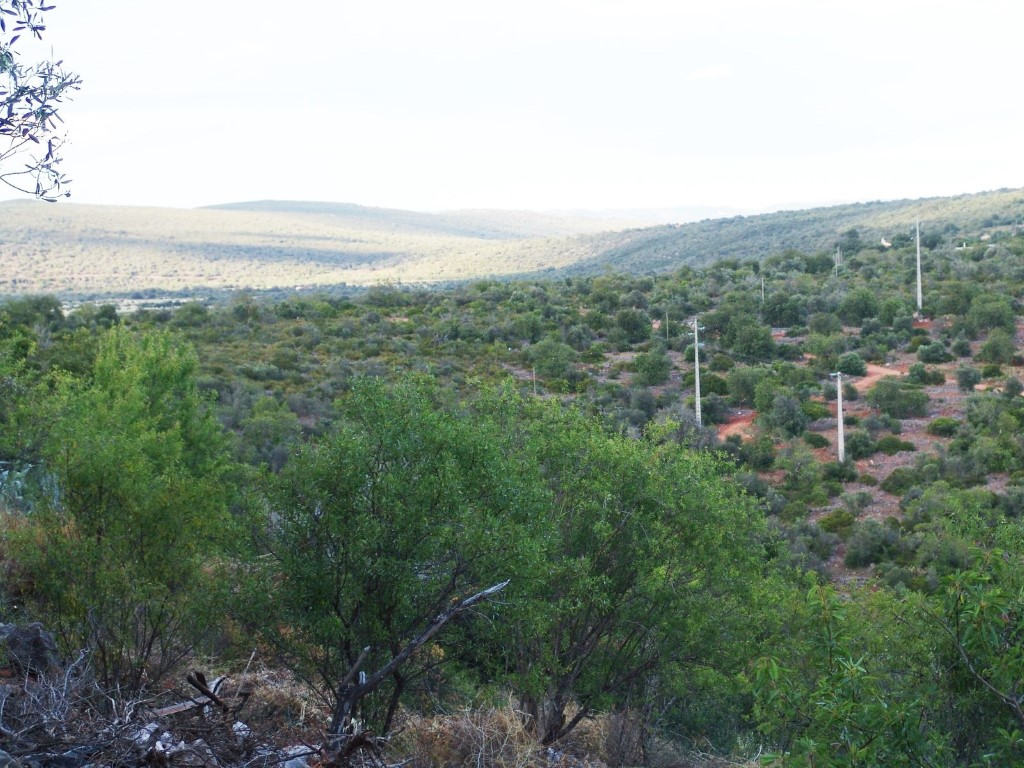 Mixed Land_for_sale_in_Esteveira_sma8949