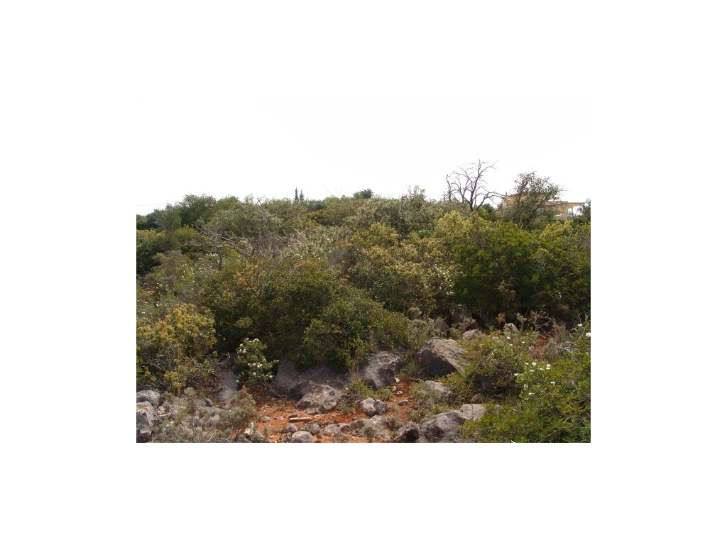 Plot_for_sale_in_Fornalha_(Moncarapacho)_SMA8982