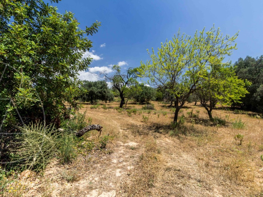 Rural Land_for_sale_in_Loule_SMA8992
