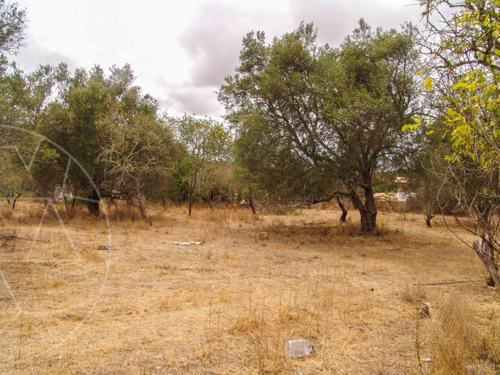 Mixed Land_for_sale_in_Goldra_SMA9029