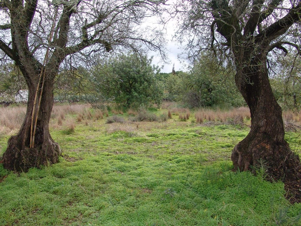 Land_for_sale_in_Santa Barbara de Nexe_sma9034